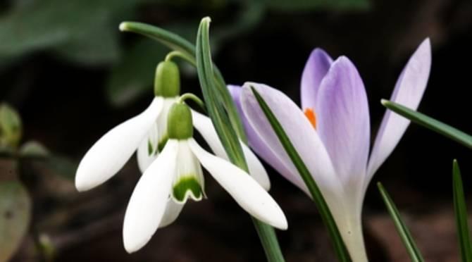 Rezultat iskanja slik za pomlad