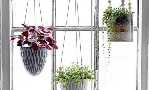 Deloindom: Kako popestriti dom z rastlinami?
