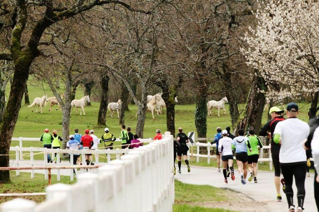 Start Malega kraškega maratona prestavljen za 44 minut
