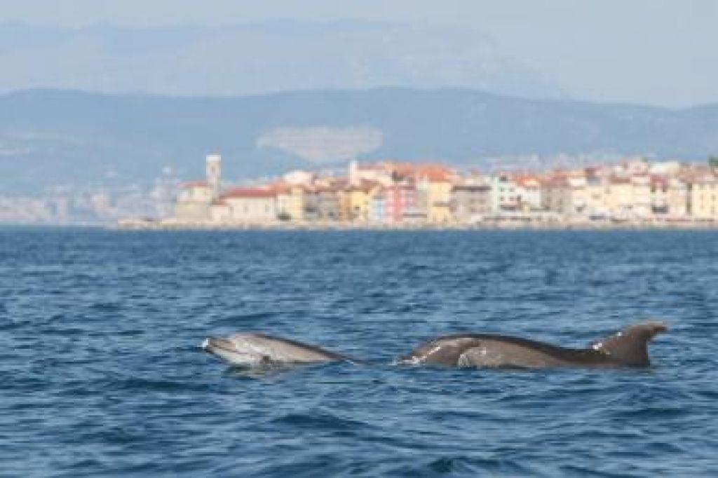 Noč delfinov