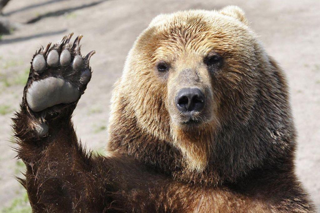 Po medvedovih stopinjah