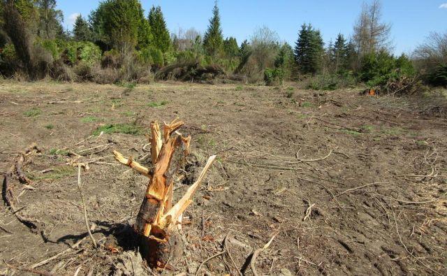 Del nekdanje drevesnice propadlega Vrtnarstva Celje, kjer so še pred kratkim stala drevesa, je povsem prazen.