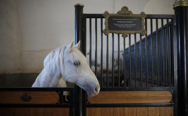Kobilarna je naredila korak naprej tudi pri organizaciji konjeniških tekmovanj. FOTO: Blaž Samec