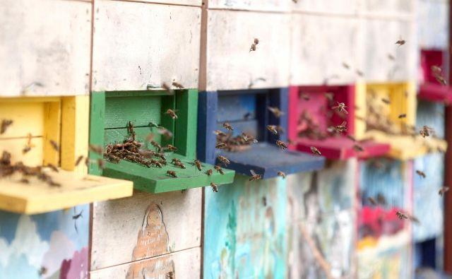 Od medonosnih čebel je odvisna približno tretjina svetovne hrane in skoraj dve tretjini sadja. FOTO: Dejan Javornik
