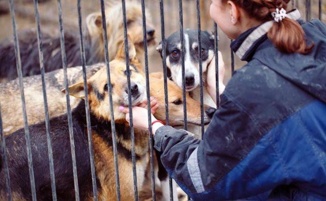 Nakup ali posvojitev živali mora biti vedno odgovorno dejanje! FOTO: Shutterstock