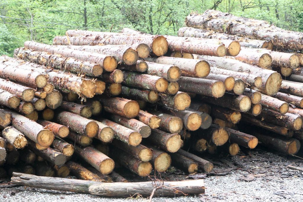 Med rezanjem drv smrtno ponesrečil