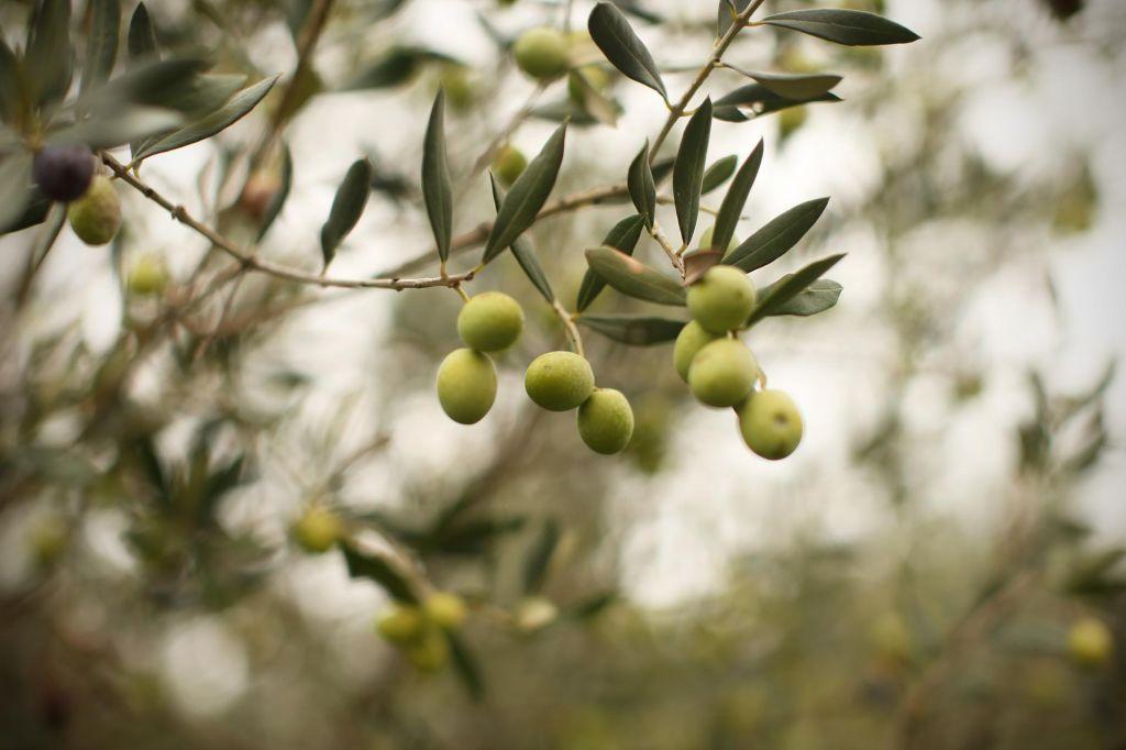 Zlata oljčna vejica Arsenu Jurinčiču iz Boršta
