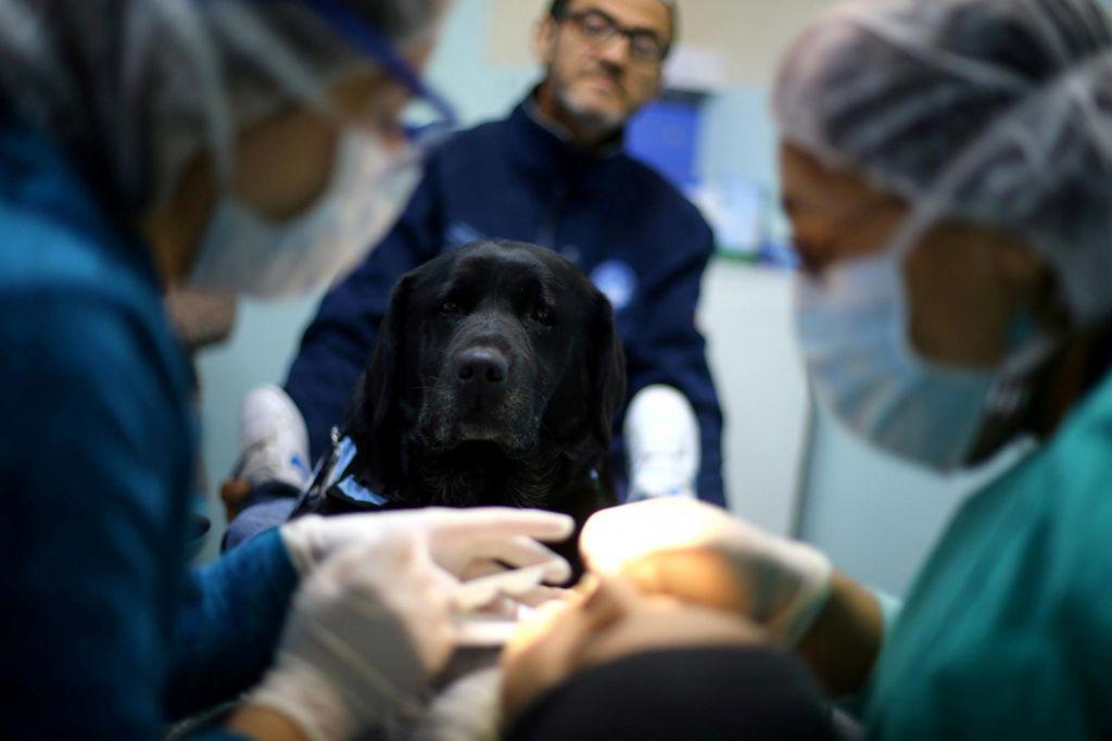 FOTO:Živalski terapevti