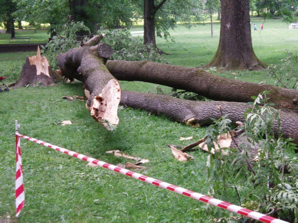 Drevo padlo na moškega in ga ubilo