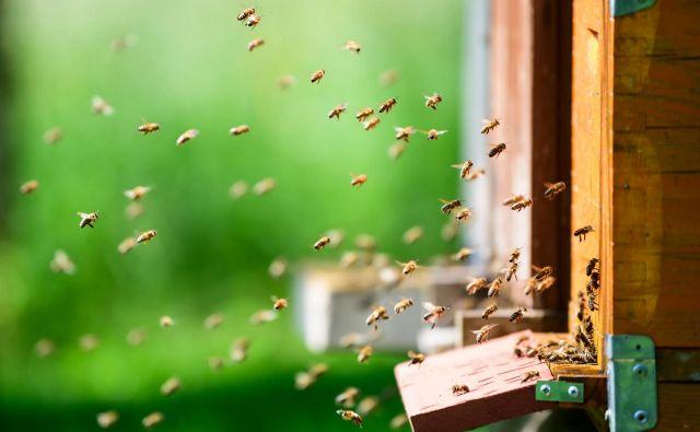Idejo, da šteje vsaka čebela, čmrlj, metulj in tudi osa, moramo posvojiti tudi intimno. Vedno, ko pomislimo, da bi nadležno žuželko najhitreje pokončali z biokillom, se zavejmo, da s tem kopljemo jamo tudi sebi. FOTO: Jure Makovec/Afp