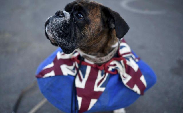 Vročico poroke je občutil tudi prikupni pes. FOTO: Peter Summers/AP