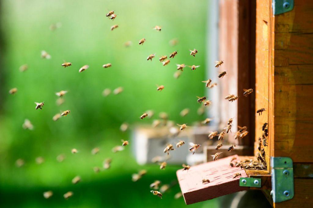 Naj brenči in brni – ne le na svetovni dan čebel