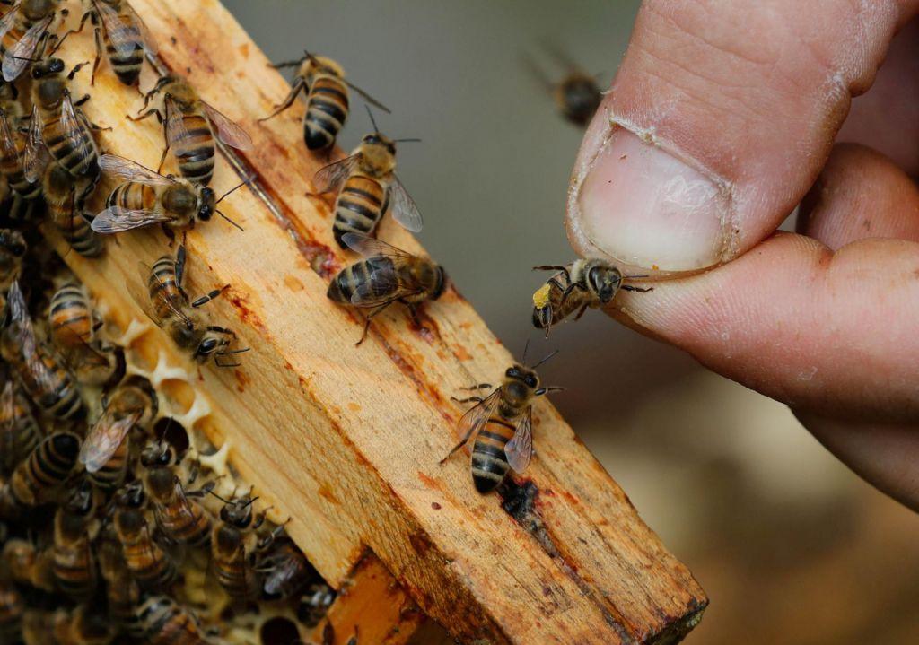 FOTO:Danes je svetovni dan čebel