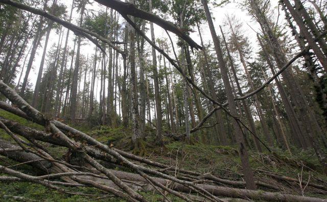 Pospravili so šele polovico poškodovanih dreves. FOTO: Mavric Pivk/dDelo