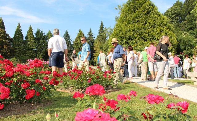 V rozariju Arboretuma Volčji potok so vrtnice v polnem razcvetu. FOTO: Jure Eržen