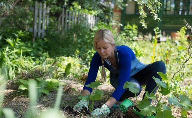 Na vrt vedno posadim več različnih sort bučk. FOTO: Jerneja Jošar