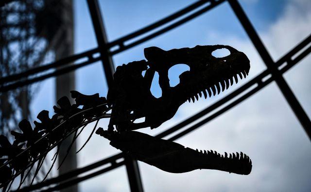 Bi imeli doma okostje dinozavra? FOTO: Stephane De Sakutin/AFP