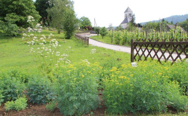 Zeliščni vrt za obiskovalce Cerovca pri Dolenjskih Toplicah Foto Simona Fajfar