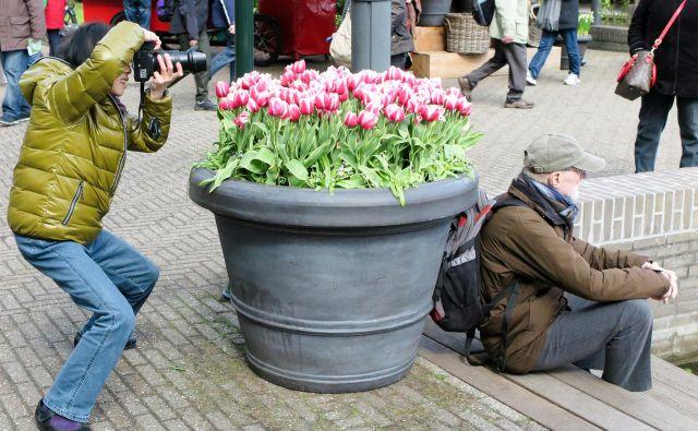 Nizozemska, dežela tulipanov, najbolje skrbi za upokojence. Foto Marko Feist