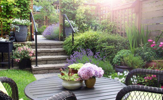 Pošljite nam največ 3 fotografije iz okrasnega vrta in krajši opis, za kakšno zasaditev ali rastline gre.