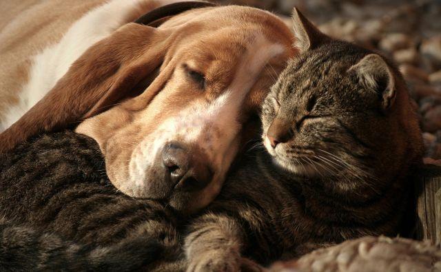 Zaščitimo svoje ljubljenčke. Foto Krka