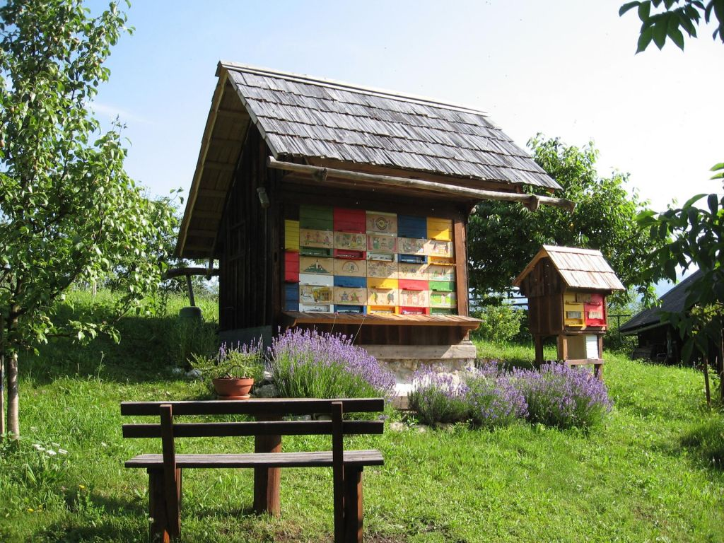 Kjer so čebele doma