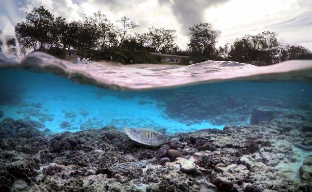 Zaradi globalnega segrevanja utegnejo biti koralni grebeni prvi veliki ekosistem v modernem obdobju, ki bo izumrl. Ob nadaljevanju trenutnih trendov izpustov toplogrednih plinov se bo to zgodilo v približno petdesetih letih. FOTO: Reuters