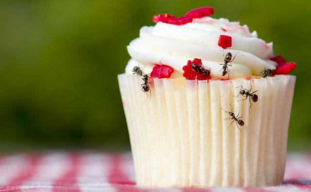 Mravlje so čistilke in bodo z mize odnesle drobtine, ki so ostali za vami, a ker bodo z delom začele že med jedjo, jim preprečite dostop do hrane.