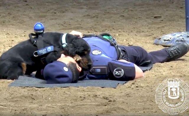 Kuža rešuje svojega človeka. FOTO: Policía Municipal De Madrid