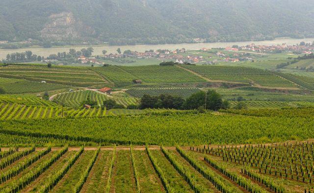 Wachau – vinogradi do Donave