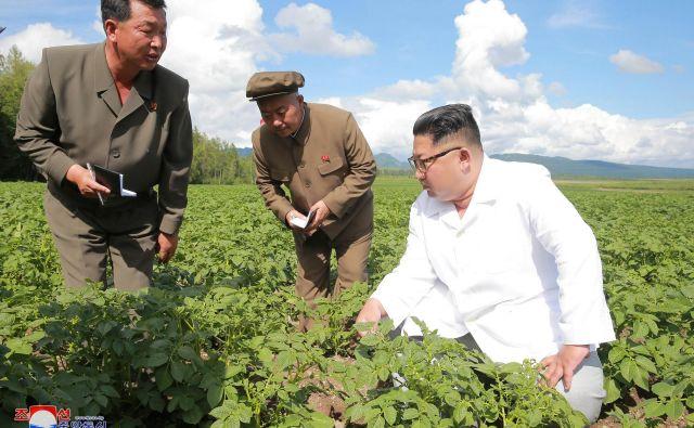 Kim Džong Un preverja, kako raste krompir. FOTO: Reuters