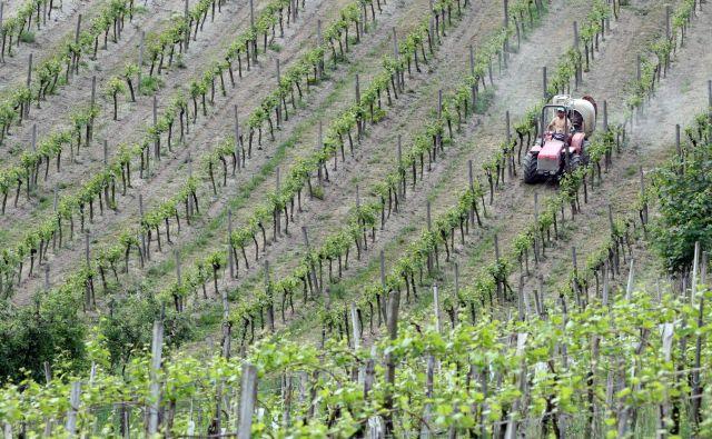 Dela v vinogradu so se tragično končala za 70-letnega kmeta iz okolice Ajdoviščine. Fotografija je simbolična.<br /> FOTO Tadej Regent