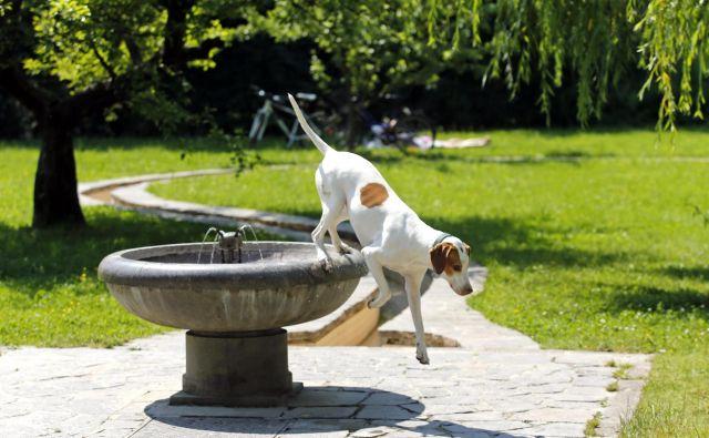 Vsak dvanajsti prebivalec Ljubljane ima psa. FOTO: Matej Družnik/Delo