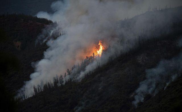 Zaradi suše in pomanjkanja padavin se države po svetu borijo z divjimi požari rekordnih razsežnosti. FOTO: Noah Berger/AP