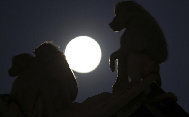 Brazilija pred popolnim Luninim mrkom FOTO: AP