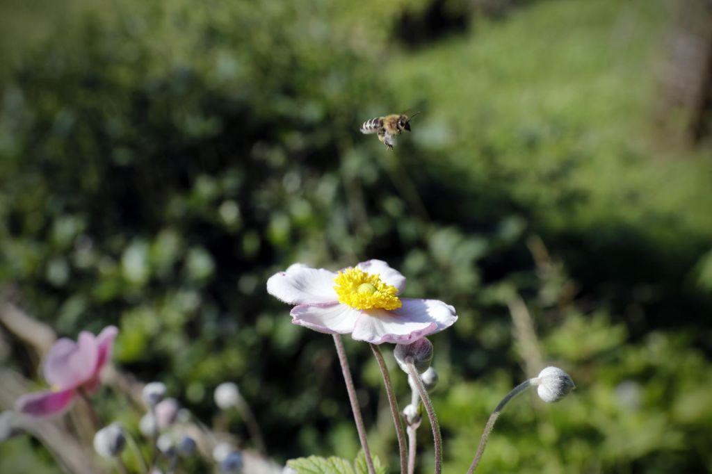 Botanični vrt v »cvetoči« družbi 11 vrtov s celega sveta do uglednega priznanja