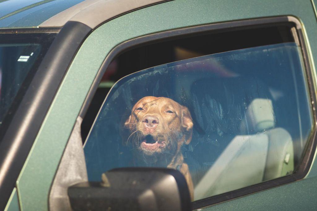 Švicarka bo plačala 1900 evrov, ker je pustila psa v avtomobilu