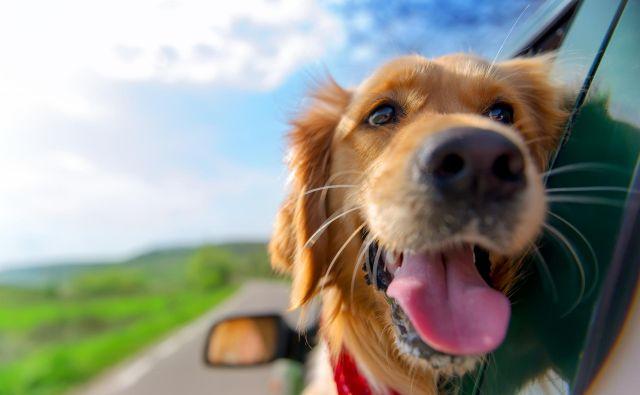 Potovanje je lahko tudi za naše štirinožne prijatelje prijetna dogodivščina, če se ustrezno pripravimo. FOTO: Shutterstock