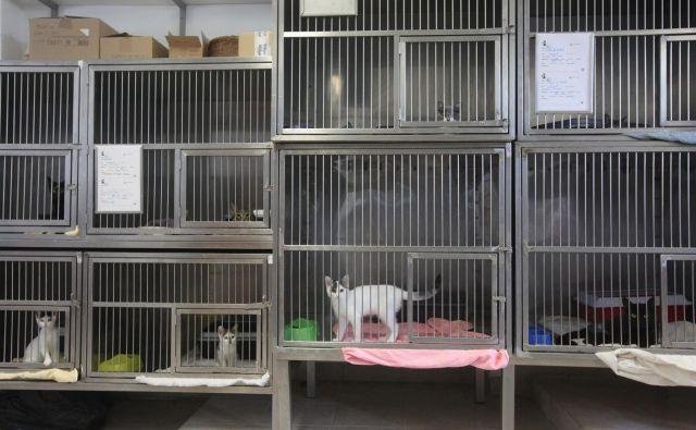 V ljubljanskem zavetišču Gmajnice je v poprečju štirikrat več zapuščenih mačk kot psov. FOTO: Mavric Pivk