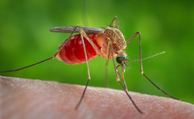Virus Zahodnega Nila, ki ga prenašajo komarji, so v Srbiji prvič opazili julija 2012, do konca leta 2017 pa je bilo prijavljenih 574 primerov okužbe. FOTO: Reuters