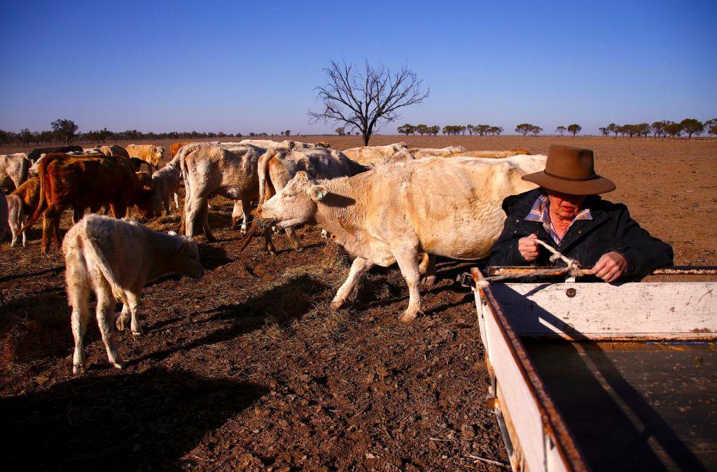 FOTO:V avstralski zvezni državi razglasili sušo (FOTO)