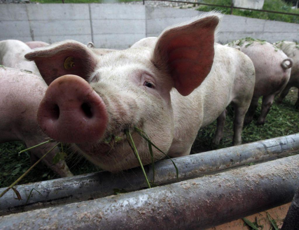 FOTO:Ciljev ne bomo dosegli brez manjše porabe mesa