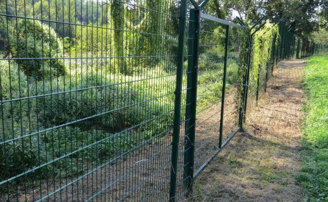 Panelna ograja ob Kolpi naj bi preprečevala nelegalne prehode prebežnikov v našo državo. FOTO: Bojan Rajšek/Delo
