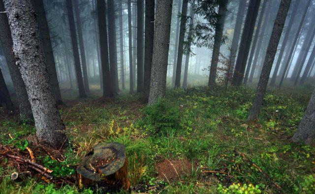 V naših gozdovih je v tleh in drevju shranjenih več kot 200 ton ogljika na hektar. FOTO: Tadej Regent