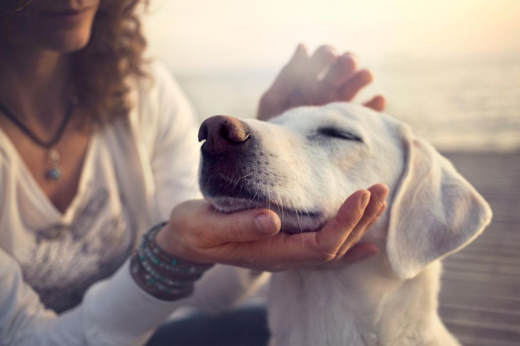 Ljudje so bolj empatični do psov in dojenčkov kot odraslih oseb