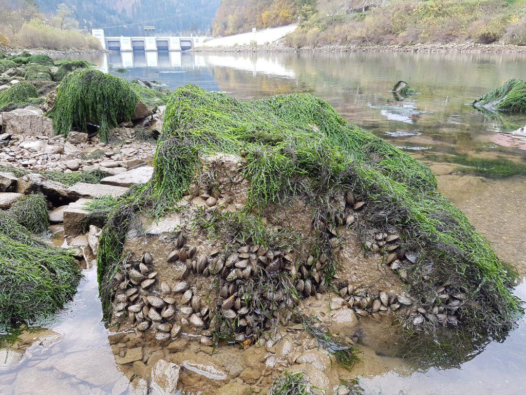 FOTO:Pobegle školjke grozijo elektrarnam