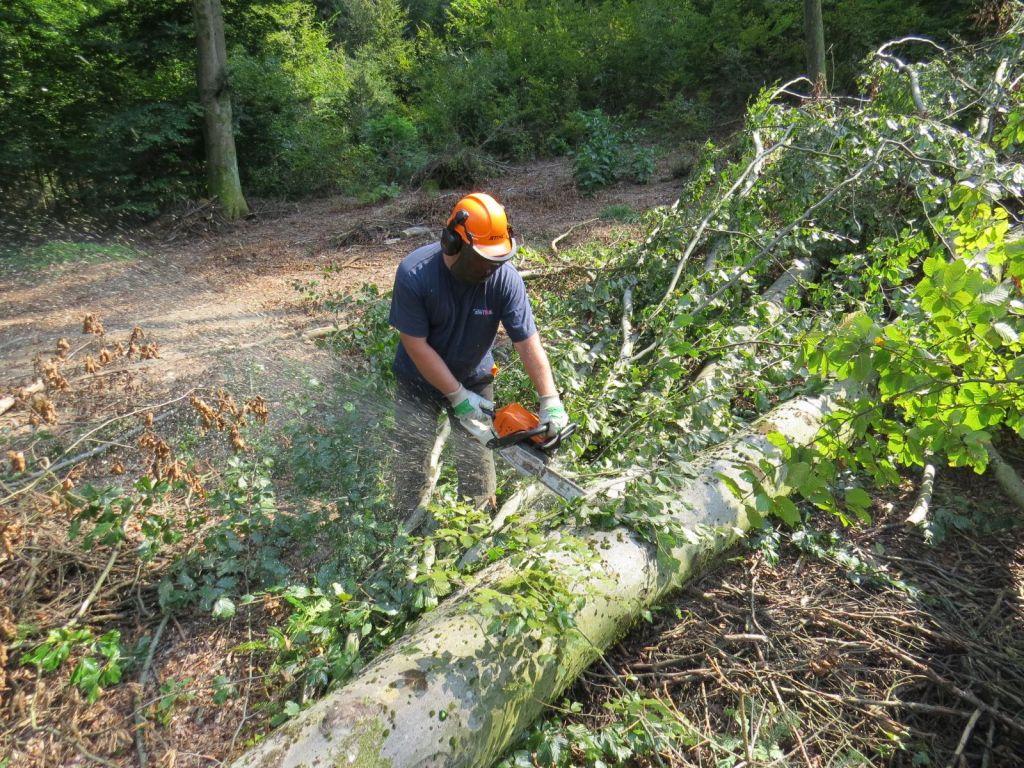 Neurja, lubadar in razvoj krčijo gozdove