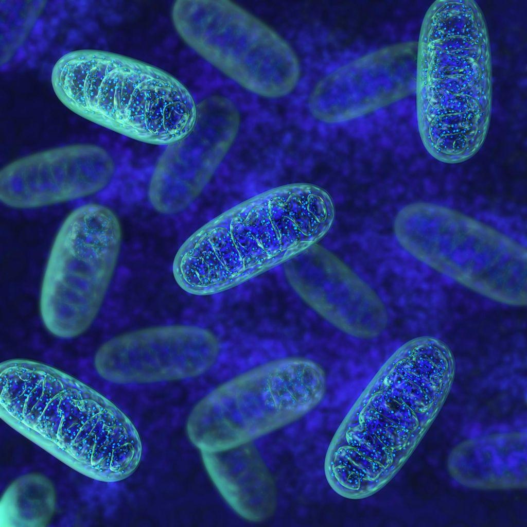 Nenavadna zgodba celice, iz katere smo vsi