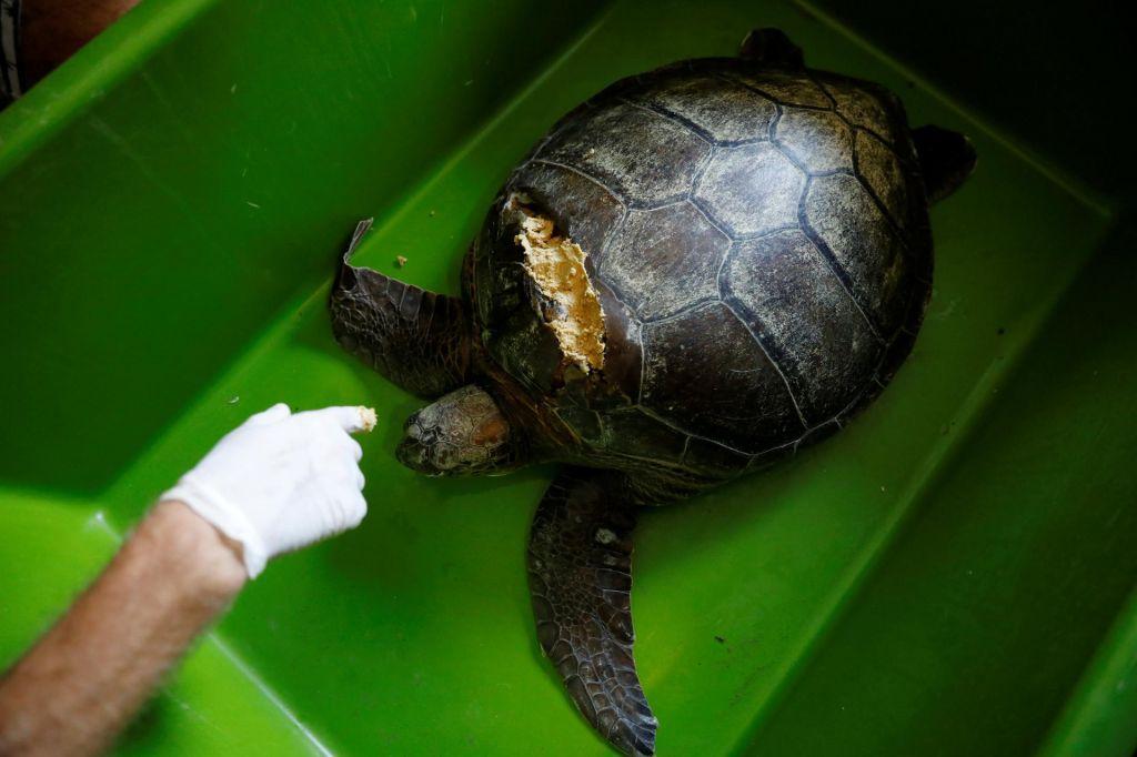 FOTO:Želvja botra