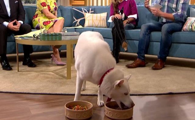 Storm - psica vegetarijanka - si je v oddaji postregla iz sklede z mesno pasjo hrano. FOTO: YouTube